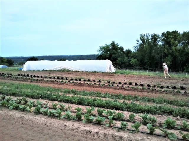 Weeding the Farm | Jupiter Ridge LLC