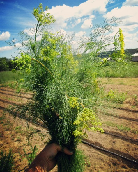 dill iowa jupiter ridge farm