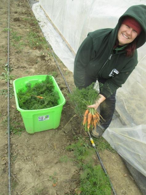 melissa carrots jupiter ridge farm