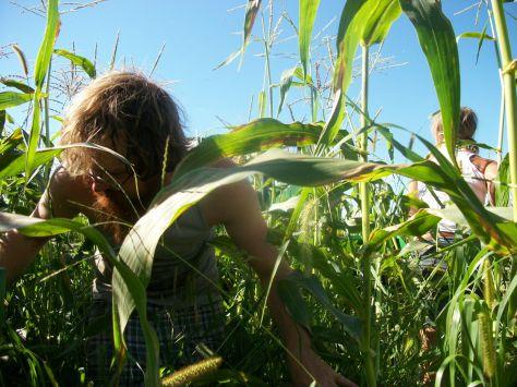 young farmers jupiter ridge farm