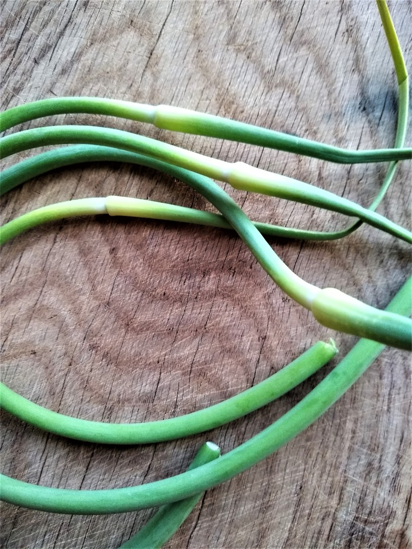 Garlic Scapes | Jupiter Ridge Farm