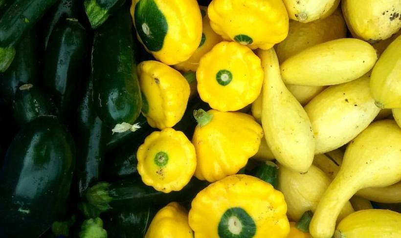 Summer Squash | Jupiter Ridge Farm