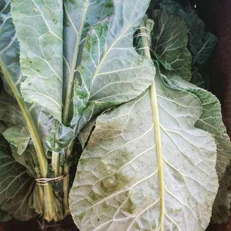 Collard Bunches