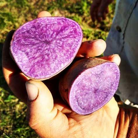 Adirondack Potatoes