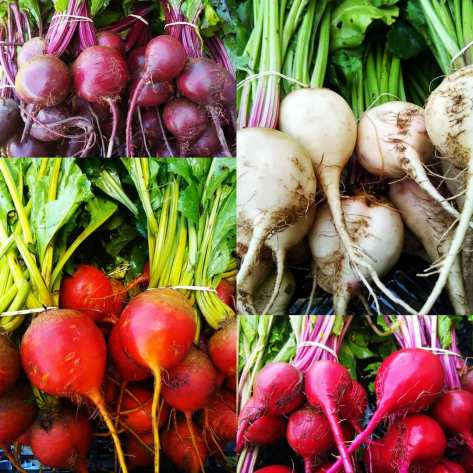 Rainbow Beets | Jupiter Ridge Farm