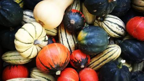 Squash Assortment | Jupiter Ridge Farm
