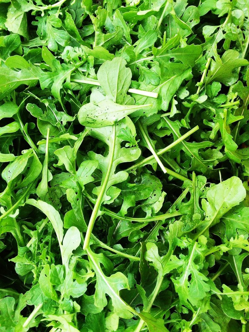 Arugula | Jupiter Ridge Farm