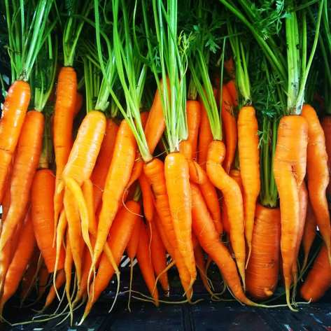 Beautiful Carrots | Jupiter Ridge Farm