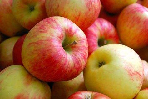 Apples | Jupiter Ridge Farm