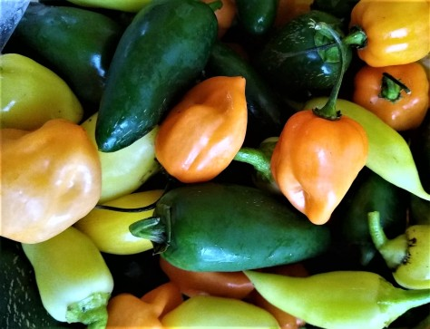 Hot Peppers | Jupiter Ridge Farm