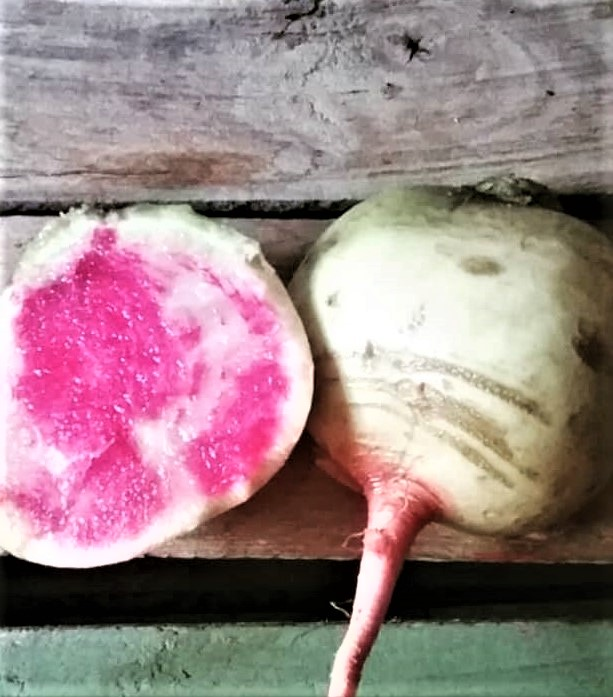 Sliced Watermelon Radish | Jupiter Ridge Farm