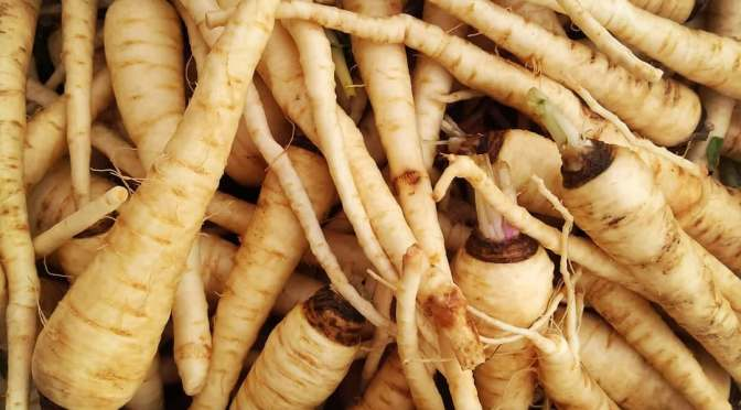 Parsnips | Jupiter Ridge Farm
