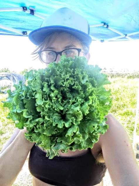 Adrian Head Lettuce