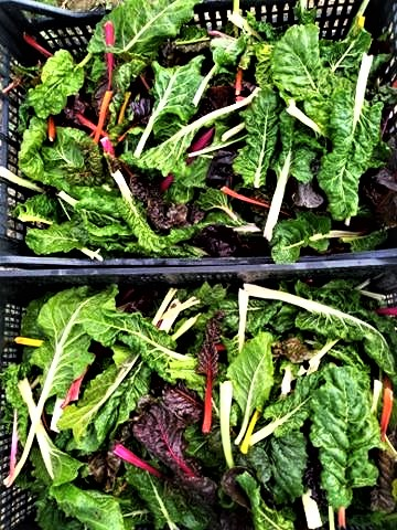 Organic Chard | Jupiter Ridge Farm