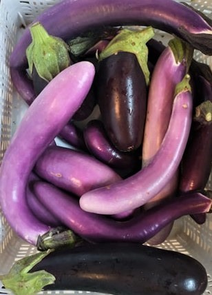 Asian and Italian Eggplants | Jupiter Ridge Farm