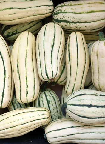 Pretty Delicata | Jupiter Ridge Farm
