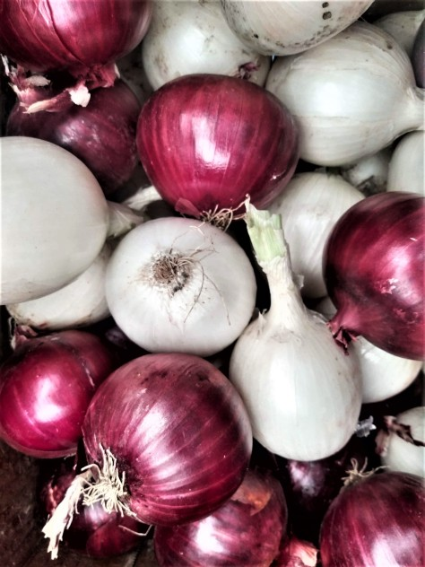 Red and White Onions | Jupiter Ridge Farm
