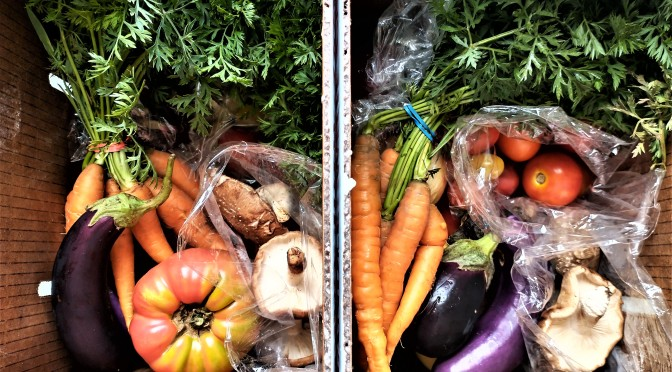 Summer Veggie Farm Share Box Delivery | Jupiter Ridge Farm